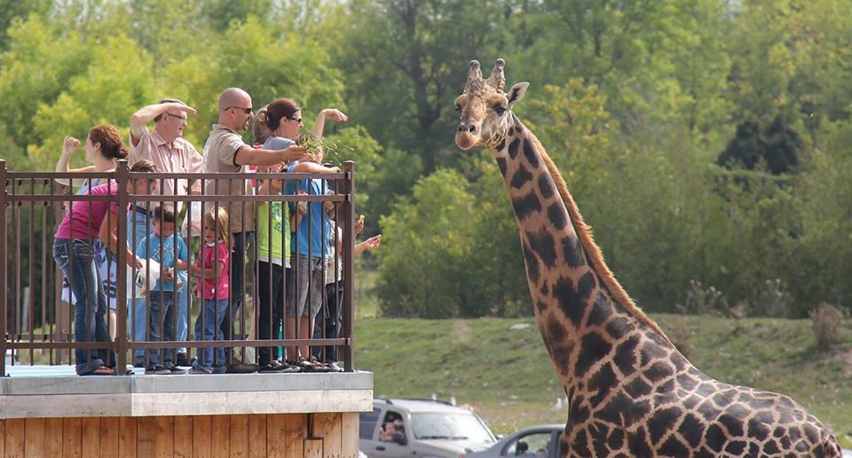 SDTC - Parc Safari (6)